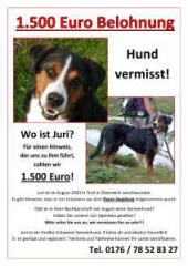 01/335-Plakat_Hund_vermisst-1.jpg